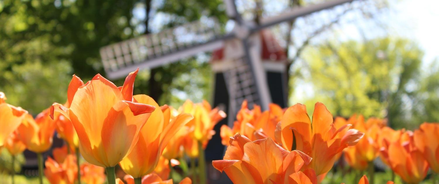 Tulip Festival 2020 Oregon.Orange City Tulip Festival May 14 16 2020