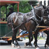 Horse-Drawn Trolley Tours